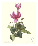 Cyclamen Print by James Linton Sain
