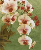 Island Orchid II Print by Chariklia Zarris