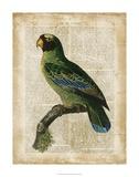 Antiquarian Birds VI Stampa giclée