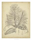 Vintage Curtis Botanical V Giclee Print by Samuel Curtis