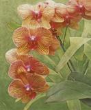 Island Orchid III Prints by Chariklia Zarris