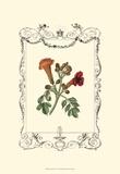 Garden Charm IV Prints