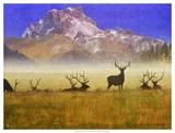 Bull Elk Kunstdrucke von Chris Vest