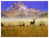 Bull Elk Prints by Chris Vest