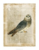 Antiquarian Birds I Poster