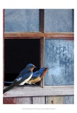 Barn Swallows Window Poster von Chris Vest
