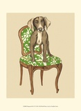 Pampered Pet IV Print by Chariklia Zarris