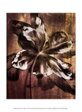 Bronze Parrot Tulip I Prints by Christine Zalewski