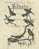 Vintage Ornithology II Posters
