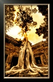 Swallowing the Ruins Framed Photographic Print by Trey Ratcliff