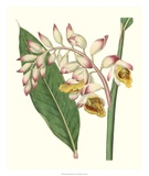Tropical Nodding Renealmia Giclee Print by Samuel Curtis