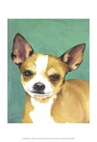 Dog Portrait, Chihuahua Posters by Jill Sands