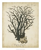 Esper Antique Coral I Giclee Print by Johann Esper