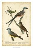 Wilson's Flycatcher Giclee Print by Alexander Wilson