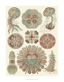Sophisticated Sealife IV Prints by Ernst Haeckel