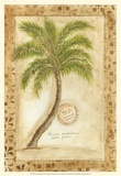 Phoenix Date Palm Prints by Marianne D. Cuozzo