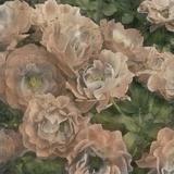 Ballerina Roses II Prints by Chariklia Zarris