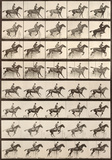 Jumping a Hurdle Art par Eadweard Muybridge