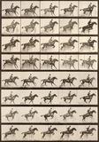 Eadweard Muybridge - Jumping a Hurdle Reprodukce