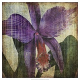 Pacific Orchid II Poster by John Butler