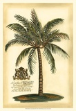 British Colonial Palm III Affiche