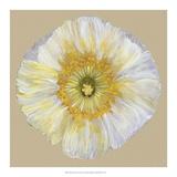 Poppy Blossom II Giclee Print by Alicia Ludwig