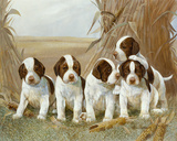 Belle's Pups Print by Ruane Manning