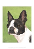 Dog Portrait, Boston Prints by Jill Sands