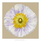 Poppy Blossom IV Giclee Print by Alicia Ludwig