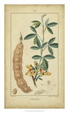 Vintage Turpin Botanical VIII Giclee Print by  Turpin