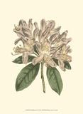 Pastel Blooms IV Poster von Samuel Curtis