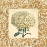 Chrysanthemum Study I Posters by Megan Meagher