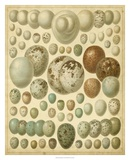 Vintage Bird Eggs I Affiches