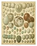 Vintage Bird Eggs I Giclée-Druck