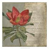 Vintage Fleur Rouge I Giclee Print by Megan Meagher