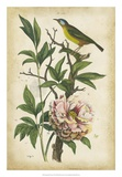Antique Bird in Nature II Prints