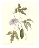 Passion Flower Prints by James Linton Sain