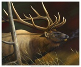 Elk Portrait II Prints by Leo Stans