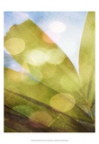 Tropical Daydream II Art by Emily Robinson