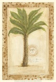 Palmetto Palm Poster by Marianne D. Cuozzo