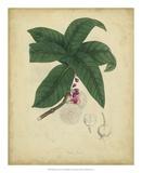 Engelmann Botanical V Poster by  Engelmann