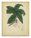 Engelmann Botanical V Giclee Print by  Engelmann