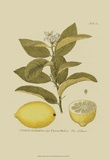 Antique Lemon Posters