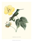 Hummingbird and Bloom I Art by  Mulsant & Verreaux