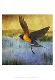 Barnswallow Poster von Chris Vest