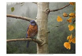Bluebird Rain Posters by Chris Vest