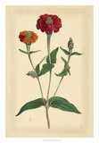 Floral Varieties III Giclee Print by Samuel Curtis