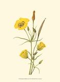 Delicate Wildflowers III Posters