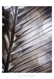 Silvery Frond II Posters by Emily Robinson