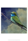 Bee Eater Kunst von Chris Vest